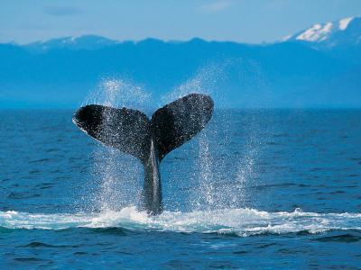 20120621163046-humpback-whale.jpg