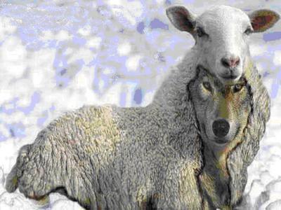 20141117175833-lobo-piel-de-oveja.jpg