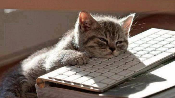 20161113181158-gato-informatico.jpg