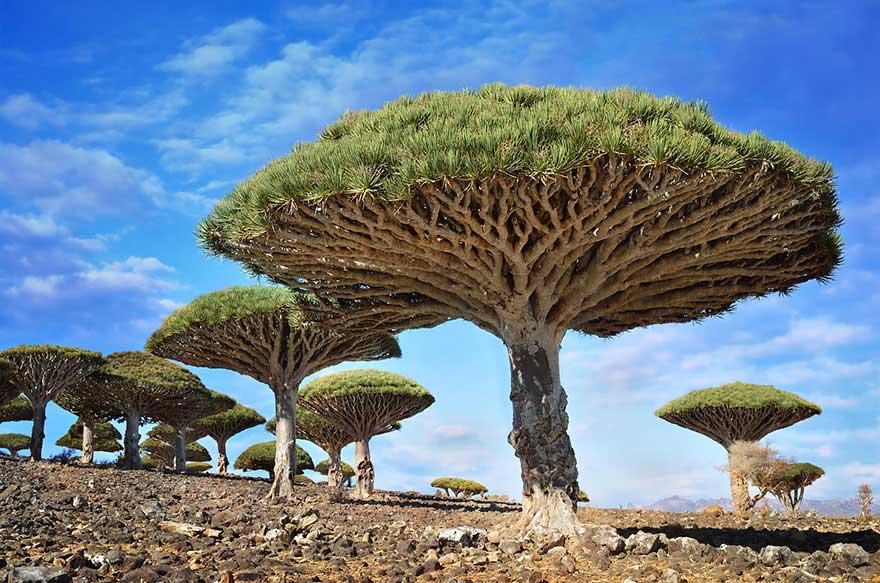 amazing-trees-14