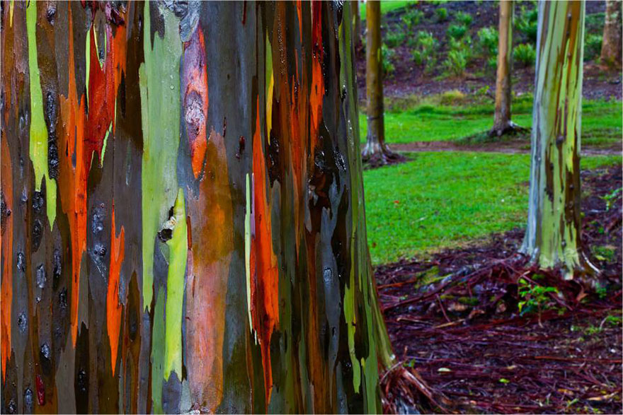 amazing-trees-19-2